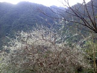 20120118_25烏来_台湾高砂義勇隊戦没英霊記念碑.jpg