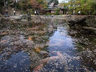 20140405_靖国神社と桜12_320.JPG
